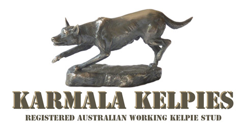 Karmala Kelpies - Registered Australian Working Kelpie Stud