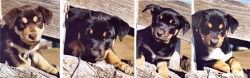 DClyde-pups4