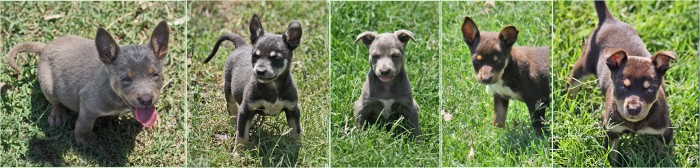 Remy pups