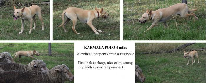 Karmala Polar 4 mths copy